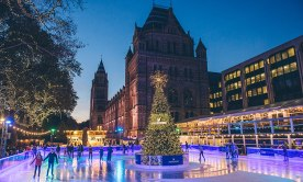 30ft tree at the Natural History Museum surrounded by the ice rink
